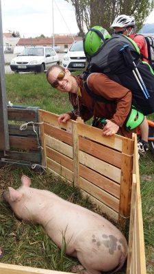 Un vrai cochon était spectateur de la Jambons Fly !